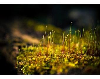 Ethereal Macro Photography, Fairyland Moss Woodland Photograph, Nature Horizontal wall art, Golden Yellow Nature Fine Art Photo Print