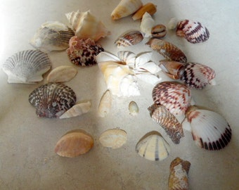 Crafts, supplies, Natural sea shells.  Nice assortment of real seashells for your crafting projects