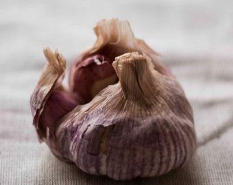 Food photography garlic; kitchen art; home decor; fine art; instant download