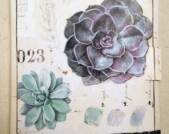 Succulent Field Guide Notes