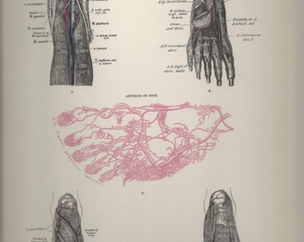 Arteries of the Foot,  Anatomical Plate 68, Descriptive Atlas of Anatomy 1880