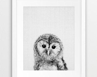 Owl Print, Woodland Nursery Wall Art, Baby Owl Print, Black And White Grey Print, Owl Photo, Bird Print, Kids Room Decor, Printable Art
