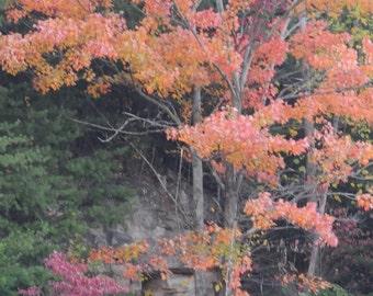 Fine Art Photography Card-Fall card-Fall photography-Fall foliage-Fall trees-Fall landscape-Fall-Autumn Trees-Trees-Nature-Autumn Landscape