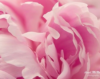 Flower photo Greeting Card, pink peony,  5x7 greeting card, Nature photography, Macro flower photo, Blank inside, Fine art photography Card