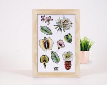 Costa Rican Native Plants Print