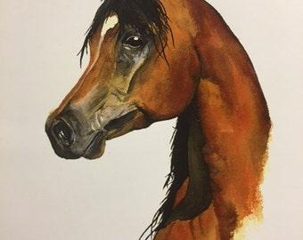"Watercolor print - ""Arabian Stallion"""