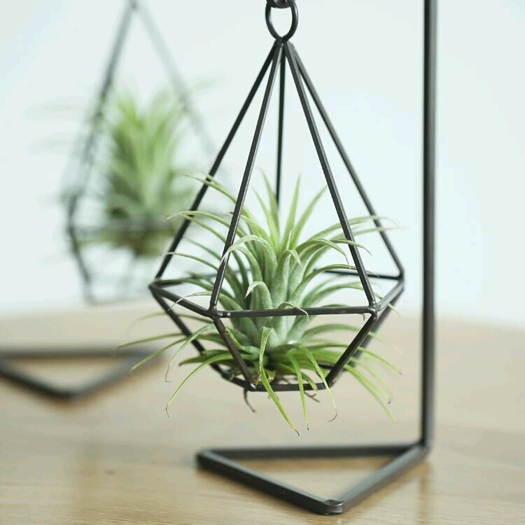 Hanging geometric metal air plant holder for Geometric air plant holder