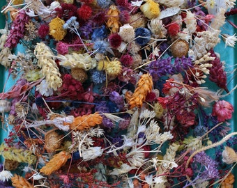Mixed bag of Miniature Dried Flowers