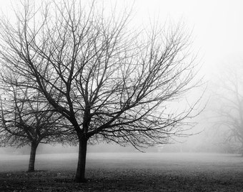 black and white photography, trees in fog, branches, winter landscape, nature, home decor, fine art print