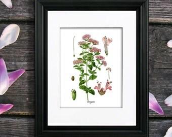 Oregano Herb Art Print no. 9 Kitchen Wall Art Culinary Herb Kitchen Decor, Gift for Mom, Gift for Her, Kitchen Decor, Vintage Botanical Art