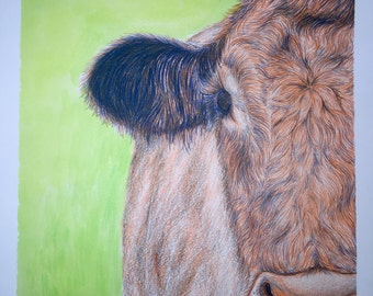 Cow Drawing Image (with FREE SHIPPING)