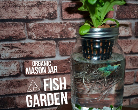Gift Guide for Nature Lovers - International Shipping. Mason Jar Organic Fish Garden - Desktop Aquaponics and Sustainable Garden (WITHOUT JAR). Unique living nature gift.
