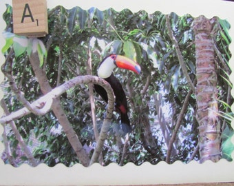 Toucan Photo Note Cards, Enlargements and Re-Usable Shopping Bag~Free Shipping!