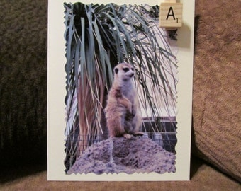 Meerkat Manor Photo Note Cards, Enlargements and Re-Usable Shopping Bags~Free Shipping!!