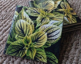 Green Coleus leaves Ceramic Coasters New! Set of 4! Mix & Match