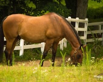 Horse Grazing Canvas 8x10