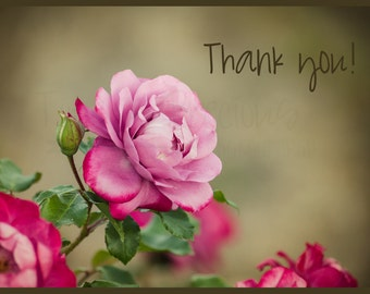 Pink Rose Thank You Note Cards 5x7 Folded Cards Floral Note Cards Photo Nature Photo Cards Set of 5 Greeting Cards Rose Print Card Thank You