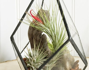 Geo Tillandsia Terraium by Zentilly©