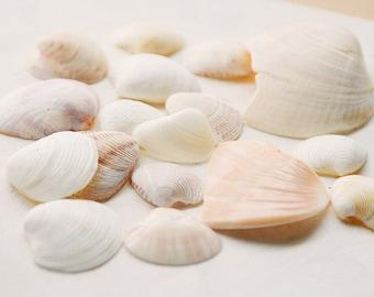 Bulk Sea Shells, Genuine Sea Shells, Natural Sea Shells,  Sea Shells, Sea Shells for Grafts