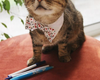 Collar and bow tie for cat