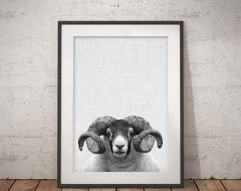 Bighorn Sheep Print, Farm Animal Wall Art, Black and White, bighorn ram, Printable Art, Nursery Animal Print, Modern Minimalist Wall Art