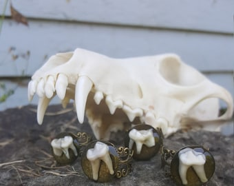 Coyote tooth and resin ring