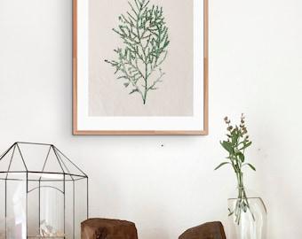 Botanical Leaf II - 8.3 x 11.7, A3, A4, A5 Artprint, Wallart, Gift, Decor, Leaf, Foliage, Floral, Green, Livingroom,
