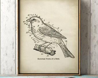 Scientific Bird print, bird chart art, ornithology, bird diagram, bird illustration, bird home decor