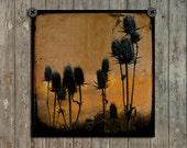 Teasel Photograph, Meadow Plants, Fields, Botanical Art Image, Nature Decor, Burnt Orange, Gypsy Combs - Rustic Teasels