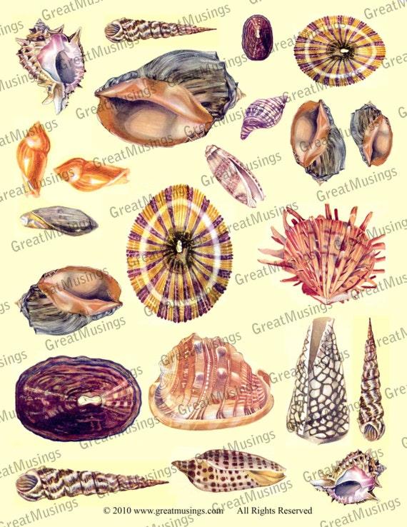 Ocean Sea Shells clip art Digital Collage Sheet Download Images Graphics No.312