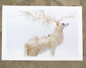 white forest - deer stag - Original Giclee Edition Print - 13x19""