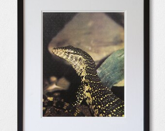Nile Monitor - 70's vintage book page