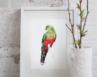 Australian King Parrot Giclee Art Print A3, A2 & A1 Watercolour Bird Painting