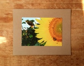 Sunflower photography print, Bumblebee
