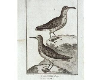1775 ANTIQUE BIRD ENGRAVING - buffon bird rare original antique print ornithology engraving - wading song birds lark
