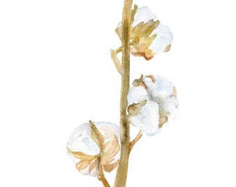 Cotton Branch Watercolor Painting - 4 x 6 - Giclee Fine Art Print