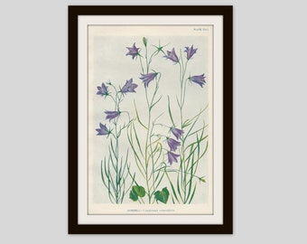 Antique Botanical Print, Cottage Decor, Vintage Wildflower, Victorian Lithograph, Original Print, Watercolor, Harebell, Plate CXLI