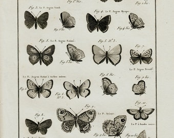 1793 Large Antique INSECT print, Butterfly print, butterflies engraving, Panckoucke. Lamarck, Entomology. original antique 222 years old