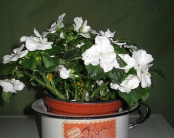 Primitive Paris France - Hotel Riga Enamelware Chamber Pot - flower pot planter
