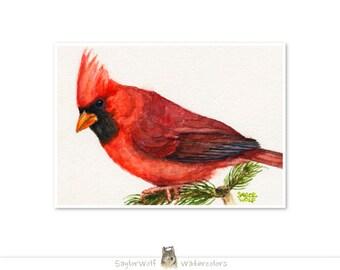 Cardinal 5x7 Art Print of Original Watercolor Bird Painting