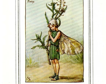 The SHEPHERD'S-PURSE FAIRY Vintage Book Plate c 1940 Cicely M Barker The Flower Fairies Original Book Page