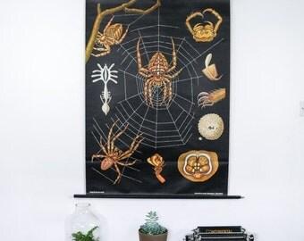 Vintage School Chart,Spider German School Chart Jung Koch Quentell