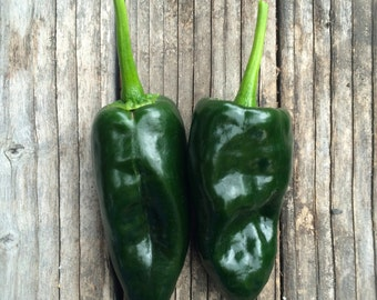 Poblano Pepper Mexican Ancho Stuffing Drying Dark Green Mild Tasting Pepper Rare Seeds