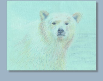 Polar Bear drawing in coloured pencils of polar bear, on pale blue paper. An original artwork (not a print)