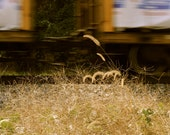 Train In Motion Movement Photo Of Train Wheels on Track Travel Photo Athens Ga Photography Unique Home Decor Photo 5x7 8x10 11x14