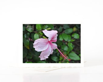 SALE CARDS, Pink Hibiscus Card, Hawaiian Flower Cards, Blank Photo Greeting Cards, Note Cards, Nature Photography, Flower Photography