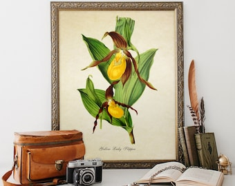 Botanical Print Orchid Print Flower Art Print Yellow Lady Slipper Orchid Giclee Home Decor Art Floral Decor Decorative Reproduction FL048