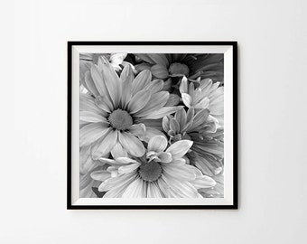 Daisies, 8 x8 in, 10 x 10 in, 12 x 12 in, Daisy Photography, Black and White Photo, Flower Photography, Flower Print, Digital Print