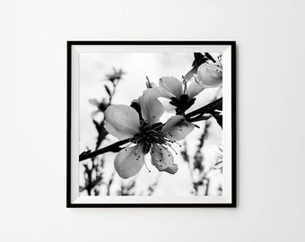 Flower print, 8 x 8 in, 10 x 10 in, 12 x 12 in, Flower Photography, Black and White Photo, Photography, Picture, Digital download