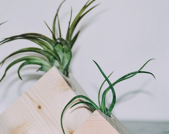 Small Wooden Pyramid Air Plant Holder (Includes Air Plant)